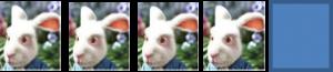 4 lapins