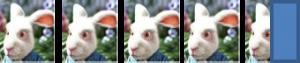 4,5 lapins