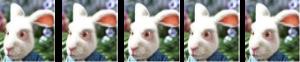 5 lapins